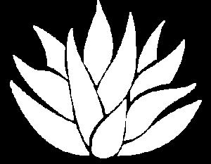 Modern Agave Plant